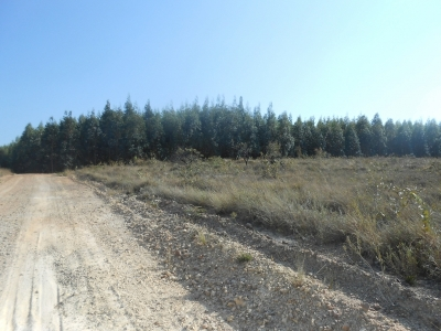 fazenda com 5300 hectares