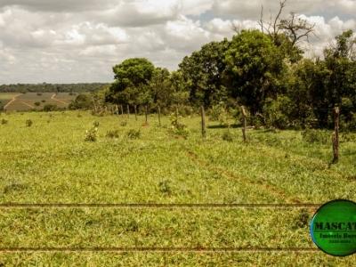 Vendo 30 alqueires (144 hectares)