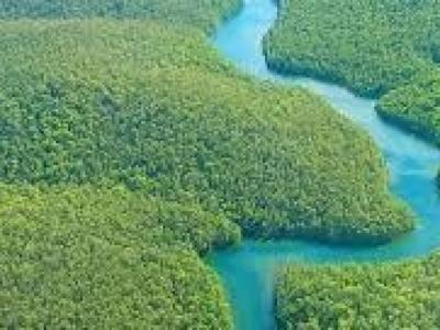 Negócios Agro e Cotas Cota Reserva Ambiental BR