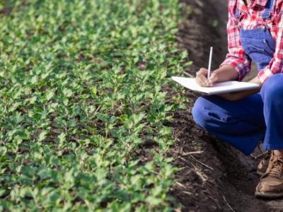 Distrib Insumos Agrícolas (Fertilizantes) - SP