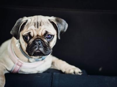 Sociedade - Pet Shop & Pet Food