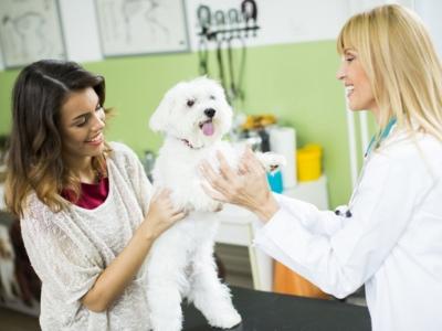 Clínica Veterinária 24 Horas