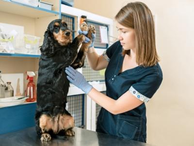 Clínica Veterinária e Estética Animal