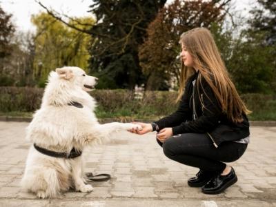 Vendo Centro de bem estar e longevidade canina