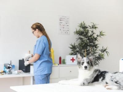 Vendo Clinica Veterinária - Banho & Tosa